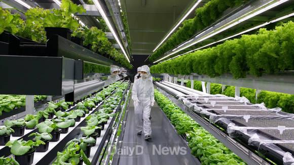 lao động Hàn Quốc ngành nông nghiệp
