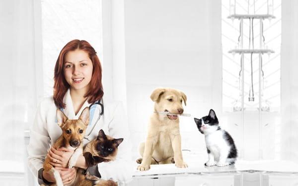 Du học Hàn QUốc ngành thú y có khó không?